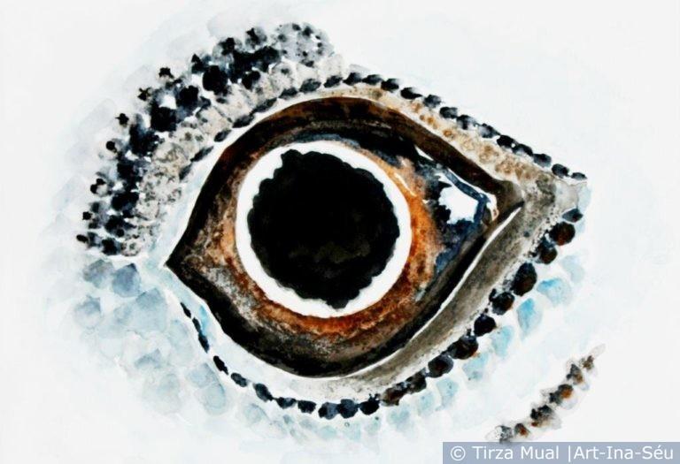 Animal Eye 17
